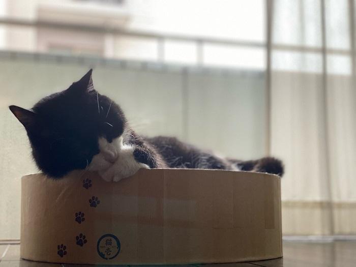 猫_1.jpg