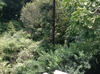 forest-miniatura-350x261-328.jpg